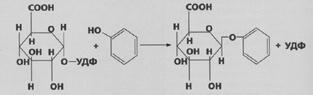 Proces katalizira glikotransferaza