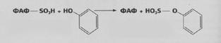 Proces katalizuje sulfotransferaza