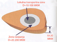 Zona propustljivosti prilikom elektroporacije, lokalna transportna zona
