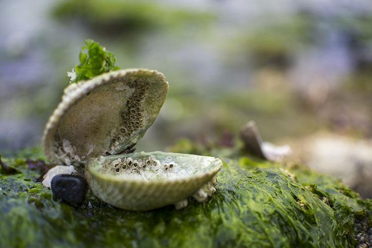 morske alge na steni