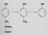 stvaranje fenola u crevima coveka